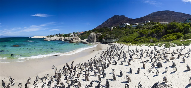 "South Africa's advanced highway infrastructure serves well-known tourist destinations such as the penguin colony at Boulders Beach in Cape Town. With car rental companies represented in all major cities and airports using ""Western"" car rental processes, South Africa is considered the most mature market on the African continent."